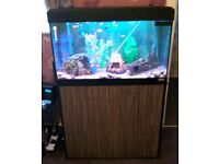 Fluval roma 125 fish tank and cabinet full set up and fish. Bargain not to be missed