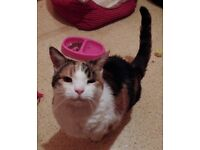 Phoebe and Meesha are looking for forever homes
