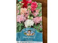 Hollyhock Majorette plants - Dwarf (90cm high), perennial (grows back year on year)