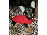 15wk old boy puppy