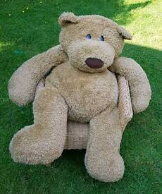 Giant Teddy in need of a home