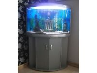 Wanted corner fish tank with stand
