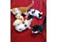 Beautiful cute kittens