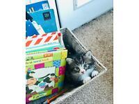 2 gorgeous girl kittens for sale