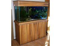 MARINE TROPICAL FRESH WATER LARGE FISH TANK AQUARIUM 453 lt &CABINET FULL SET UP