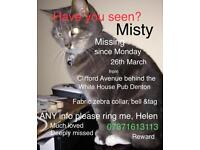 Much loved cat missing