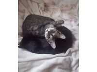 Lovely engaged couple with two sweet cats looking for a 1 bedroom flat or studio flat