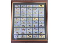 Greyhound racing pictures - framed cigarette cards & poster