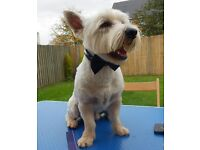 dog grooming in your own home