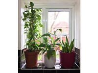FRESH INDOOR PLANTS