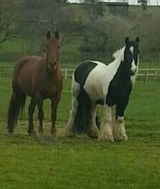 Horses part loan OFFERED