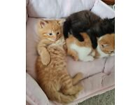 Lovely Kittens Ready To Reserve Now