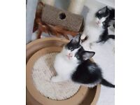 Fun & Friendly Kittens For Sale Ready Now