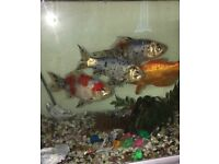 Fish tank, aquarium including 4 happy fishes ;))