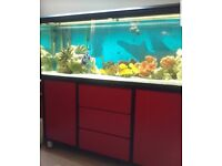 Milawi Cichlids and Cat Fish