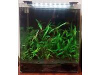 Dennerle 60L Nano Cube Complete Aquarium, Red Rili Shrimp