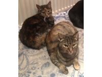 Missing Female Tabby Cat (cat sitting in the front of this image)