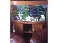 Jewel Aquarium (Bow Shaped) and accessories