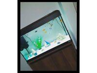 125l fish tank