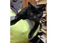 I'm a beautiful cat called Yam looking for a loving home