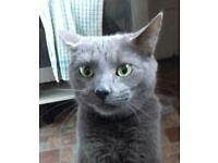 Two male cats neutered aged 4