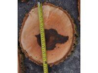 Large Rustic Log Slices weddings parties etc