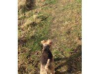 Don Tait (Paws4Walks) Edinburgh Dog Walker, walking since 2002