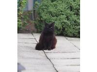 Cat Lost /Found