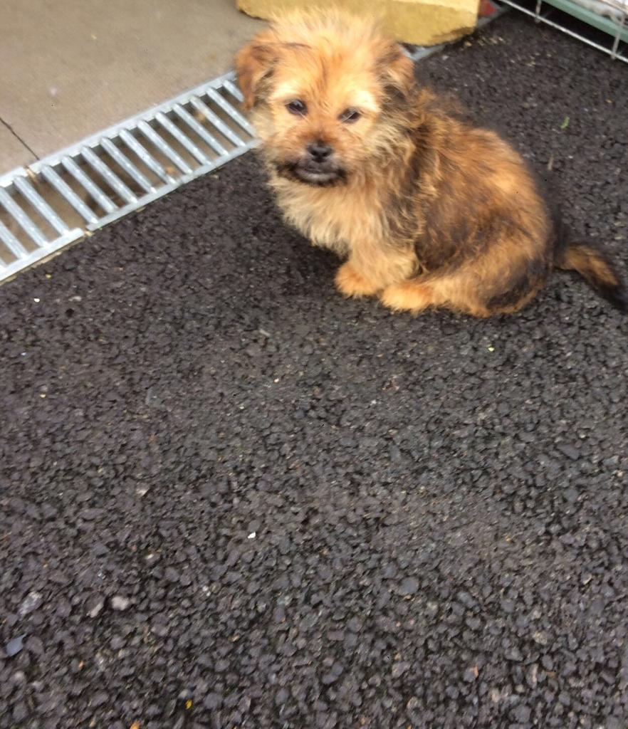 Small Dogs Free To Good Home West Midlands