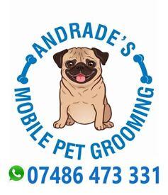 Eddies diy dogwash scotties dog grooming in leith edinburgh andrades mobile pet grooming solutioingenieria Images