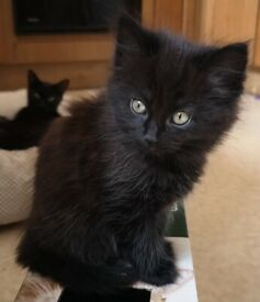 Beautiful kittens looking for a loving home.