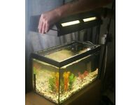 fish tank with 2 pumps
