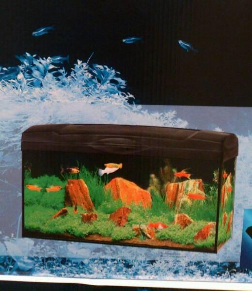 aquarium neu in dortmund dortmund mengede aquarium und aquaristikzubeh r g nstig ebay. Black Bedroom Furniture Sets. Home Design Ideas