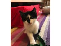 Both kittens have been reserved
