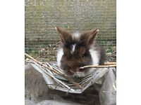3 young rabbits need a new home