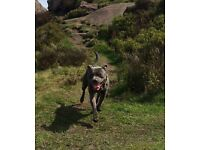 Dog Walker -