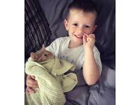 13 week onld male kitten For sale £50