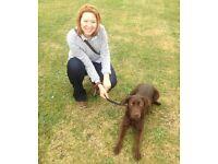 northolt dog walking/day care
