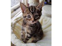 🐾 2 stunning female kittens 🐾