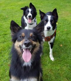 Clover & Friends - Dog Walking Services