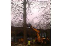Climbing Arborist/Tree Surgeon