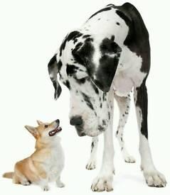 Care n Cuddles Dog Sitter