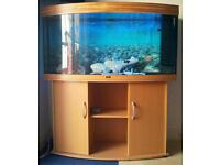 Jewel vision 260 bow fronted fish tank