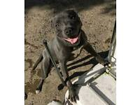 Staffy readvertised due to timewaters