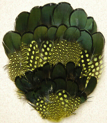 Dyed GUINEA/PHEASANT Feather PAD - YELLOW (Headband/Hats/Craft/Millinery/Trim)