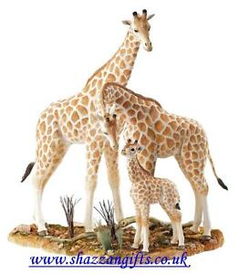 Country-Artists-Natural-World-Giraffe-Family-LARGE-40cm-16-RRP-199-00-New