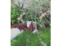Dog walking and Pet care services in Calne and surrounding villages