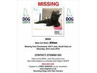 LOST 17week old kitten!!!