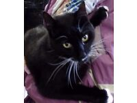 Boxley would love to be yours!