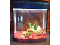 FREE GOLDFISH AND TANK TO GOOD HOME